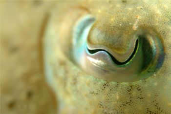 I shot this cuttle fish in Jersey, UK.   I spent the most... by Paul Carpenter 